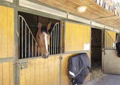 haras-chevaux-aix-en-provence