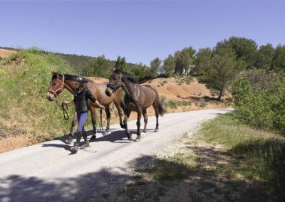 pension-chevaux-aix-en-provence-2