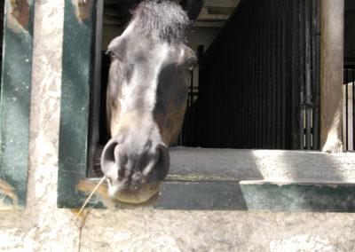 pension-chevaux-aix-en-provence